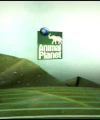 Animal Planet IDs